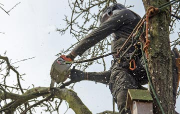 the process of removing dead wood from Farnborough trees