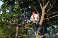 Farnborough tree crown reduction services